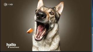 Witzige Hundefotos: So haben Sie Ihren Hund noch nie gesehen