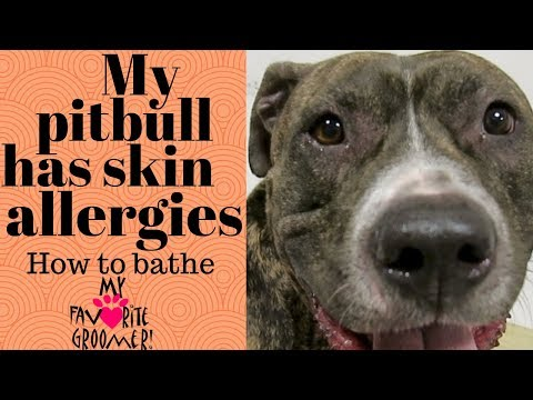 My pit bull with skin allergies