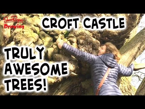 A visit to Croft Castle - What awesome trees!