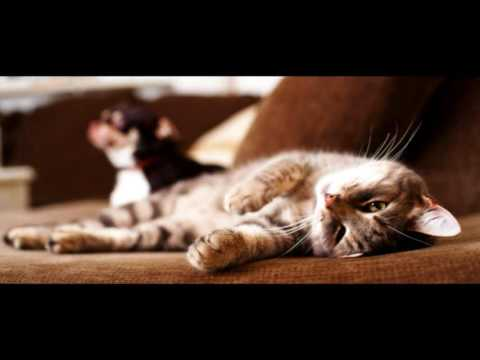 Care for Cats - Exercise for Cats - Cat Tips