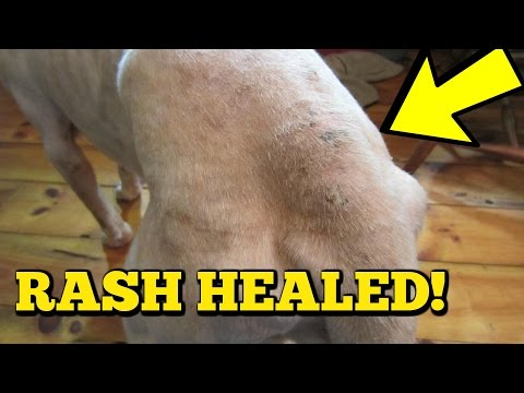 Dog Skin INFECTION - Hot Spot REMEDY that REALLY WORKS!