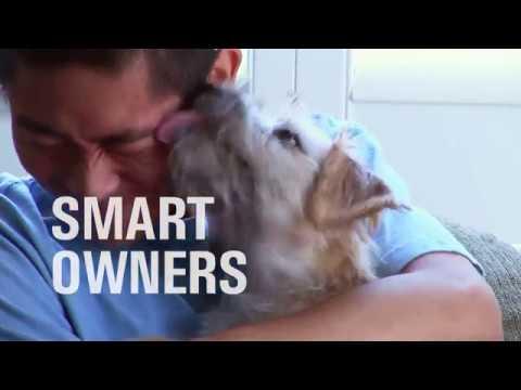 Smart Pets – Healthy Gums