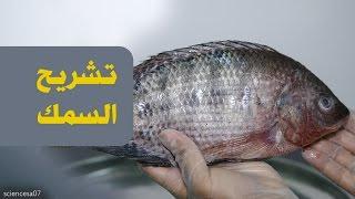 #x202b;تشريح السمكة | Fish Anatomy#x202c;lrm;
