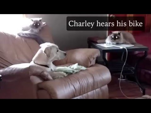 Daddys Home The Charley Vlogs
