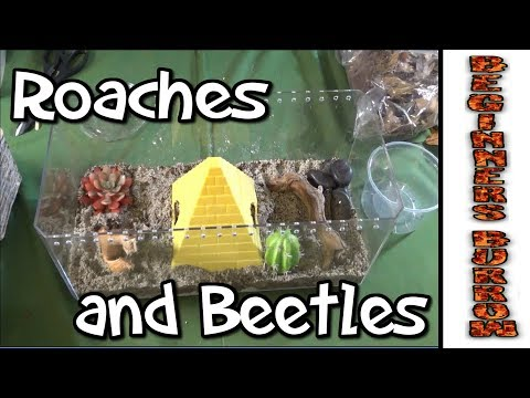 Beetles and Roaches and Worms Oh My! - Beginners Burrow