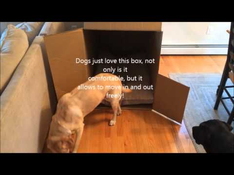 Dog House In A Box
