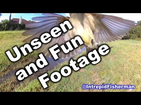 Some Unseen footage and some fun highlights. Bass gar redfish eel sunfish stingray