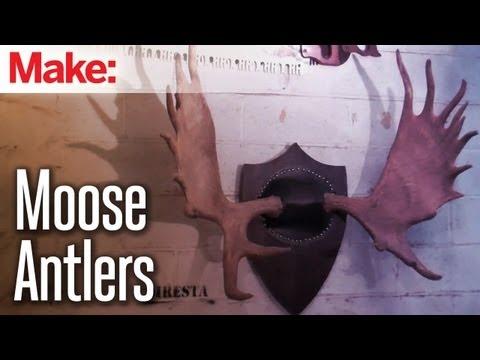 Diresta: Mounting Moose Antlers