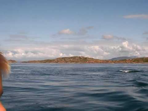 Dolphins Scotland Mull Iona