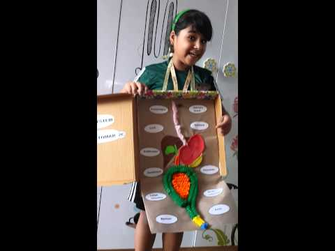 Digestive system project by Aanya Tomar