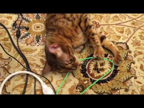 Beavis chewing wires