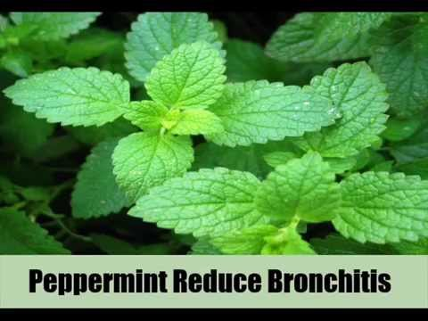 8 Best Food To Cure Bronchitis