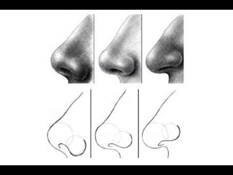 how to draw nose  for beginners 2