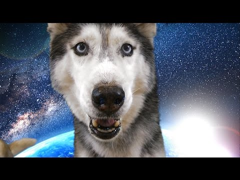 Mishka the Husky in Outer Space! (fun with a green screen)