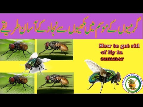 How to get rid of fly in summer. how to kill flies in the house | How to get rid of flies outside