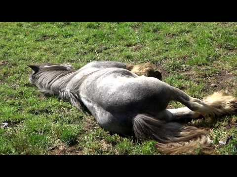 Horses Sleeping Peacefully In The Sunshine