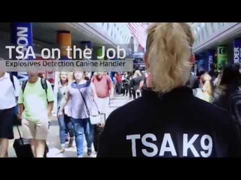 TSA on the Job: Explosives Detection Canine Handler