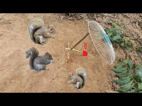 How To Make Squirrel Trap Work 100% - Awesome Quick Animal Trap Using Electric fan guard