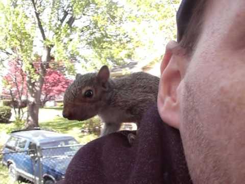 Pet Baby Squirrel Part 1