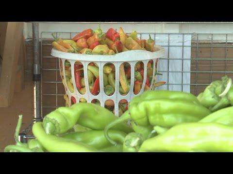 Albuquerque woman hopes to create potato chip with New Mexico twist
