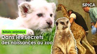 Bébé animaux dans les secrets des naissances au zoo