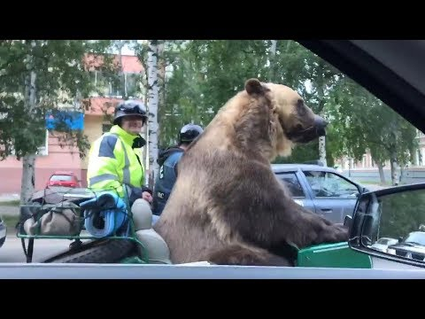 Russian Bear Rides Motorcycle and Waves to People