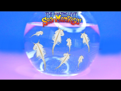 THE AMAZING LIVE SEA MONKEYS! Cute & Easy Pets for Kids - Fun Kids Activity Review