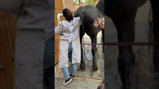 Best wild horses Mare revolutionizing young foals future stallions Horses 117