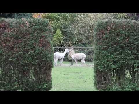 Botany House Ltd - A Day In The Life Of A Carehome Video