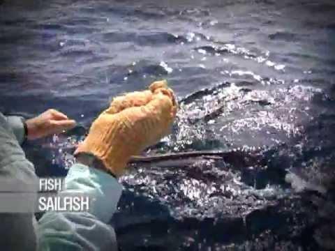 Sailfish caught Fly Fishing!! : Fly Fishing: Seychelles