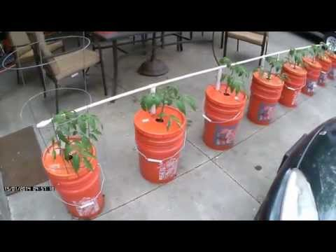 Easy Watering - Self Watering Bucket System - Growing in Buckets