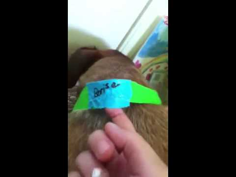 How to make a duct tape dog collar part 2