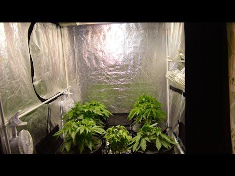 1000w 4x4 Grow Tent Firing Up - GFG