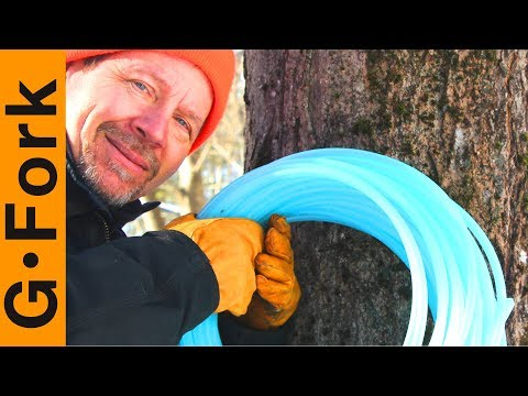 Lets Get Ready To Tap Maple Trees To Make Maple Syrup | GardenFork