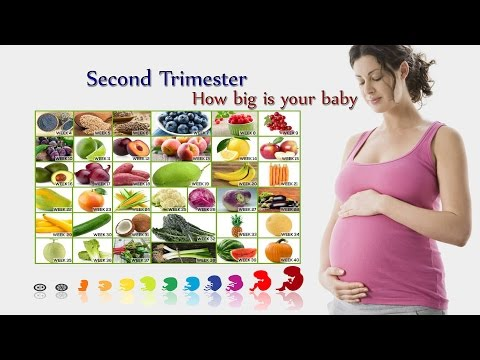 How big is your baby week by week fruit comparison - Second Trimester