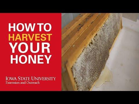 How to Harvest Honey in Beekeeping