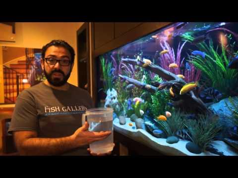 Adding Water to Aquarium - Fish Gallery