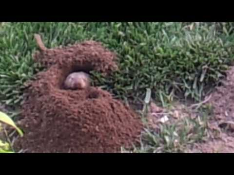 The critter digging up my yard