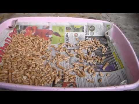 Cleaning a Rabbit's Litter Tray
