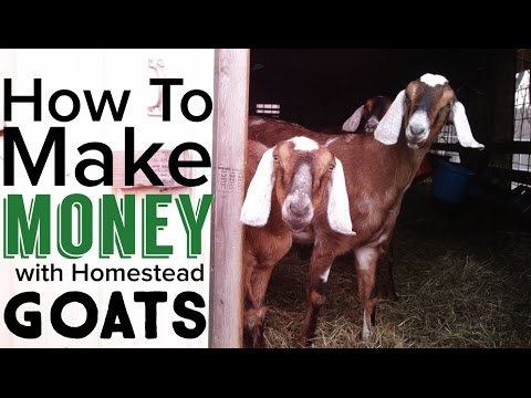 How to Make Money Raising Goats