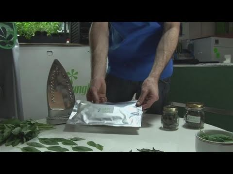 How To Store Dried Basil