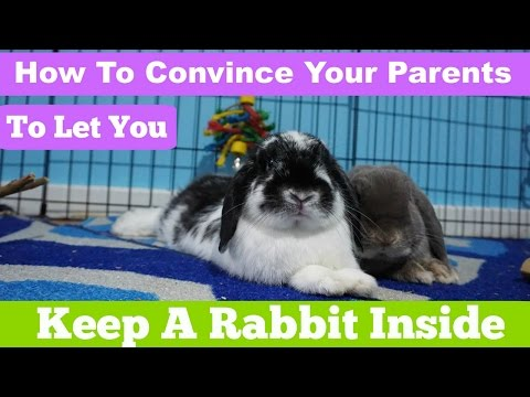 how to convince your parents to let you keep your bunny in your room
