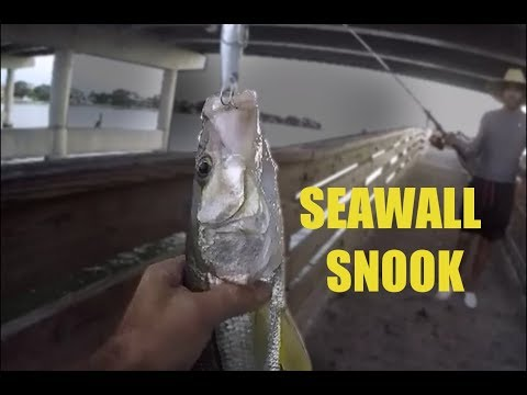 Fishing For Snook Around Seawalls