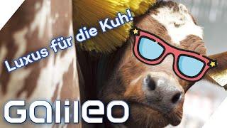 Eine Wellness-Farm für Milchkühe? Hier kommt die Kuhhaltung der Zukunft| Galileo | ProSieben
