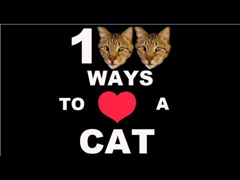 100 Ways To Love A Cat: Ways 1-100