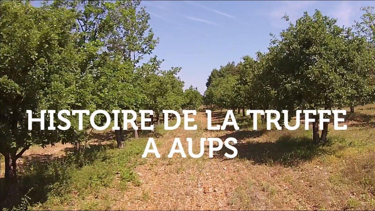 Histoire De La Truffe à Aups