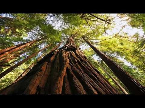 Muir Woods National Park -  San Francisco