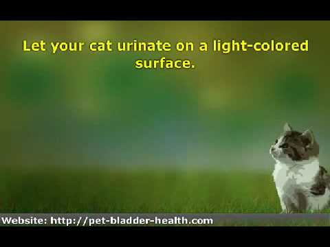 8 Ways to Tell If Your Cat Has a Urinary Tract Infection
