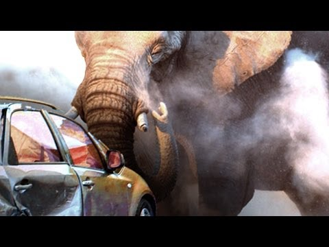 Elephant Attacks Our Car - On African Safari [Exclusive Video]