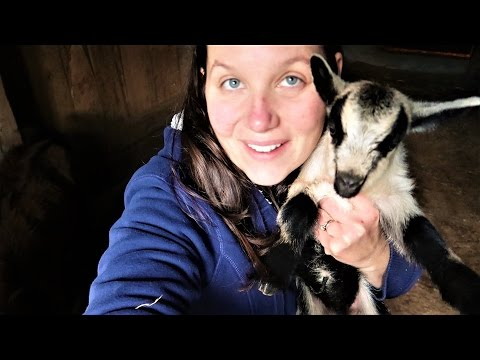 Baby Goats!  The Day After Kidding - What Do We Do Now?